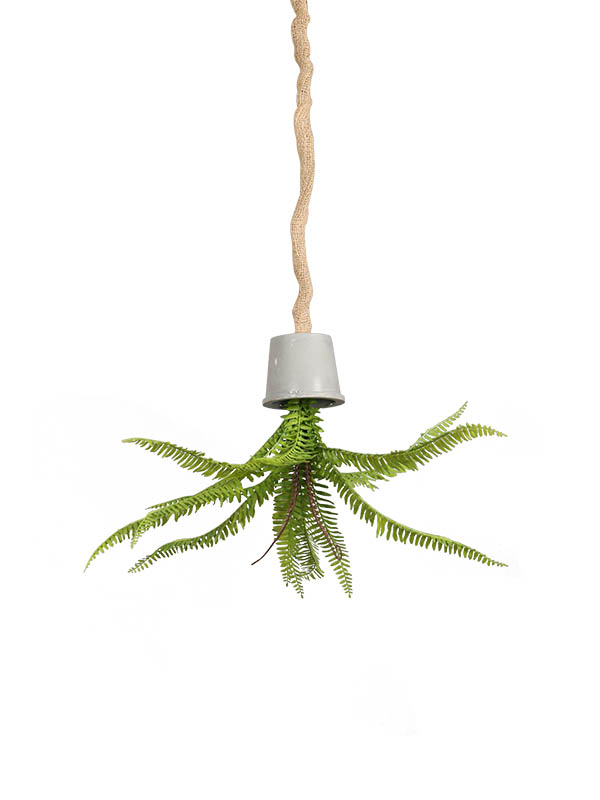 HANGING BLOOMING FERNS