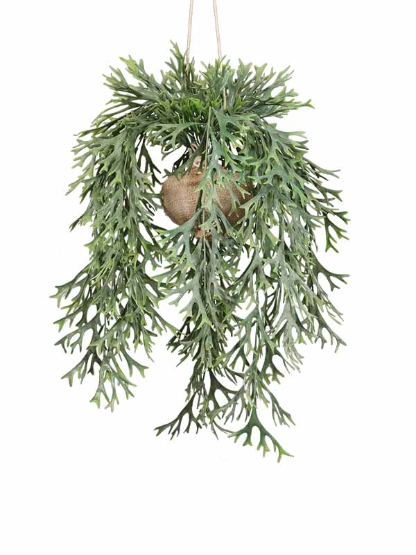 Evergreen Fern Potted Plant