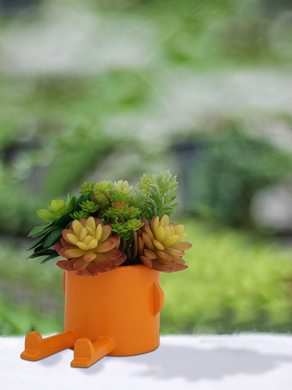 Echeveria Potted Plant