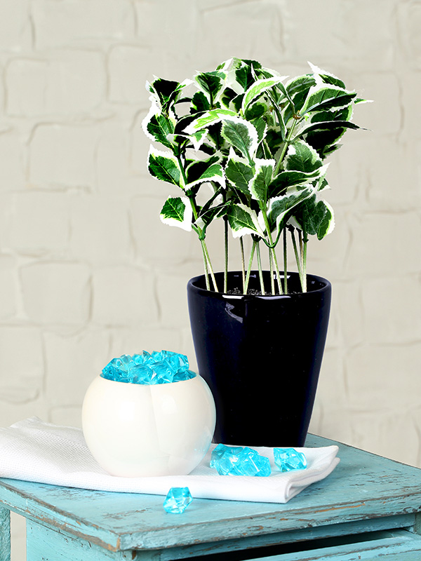 Green Envy Plant (Small)