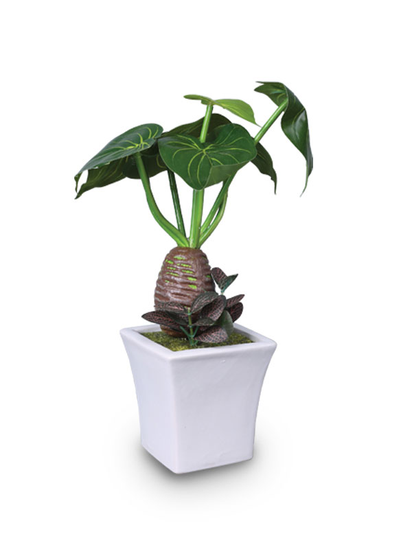 Dishgyi Potted Plant