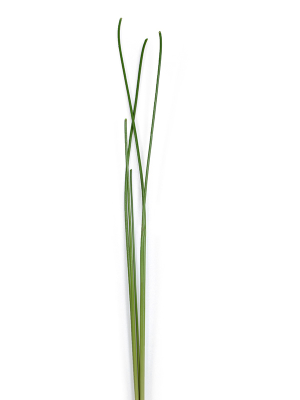 Faux Grass Stick