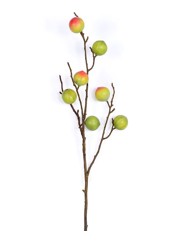 Curcas Fruit Stem