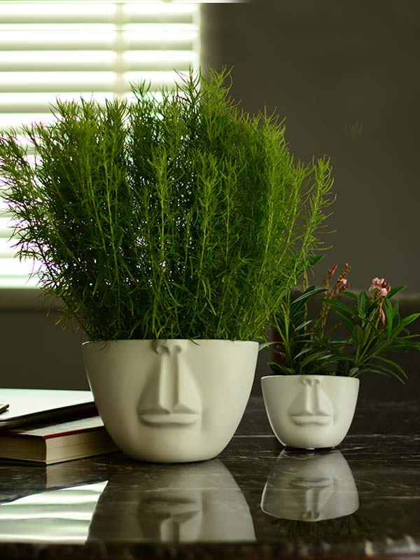 Valar Face Planter (Small)