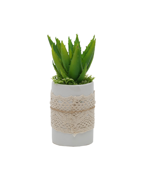 Potted Aloevera