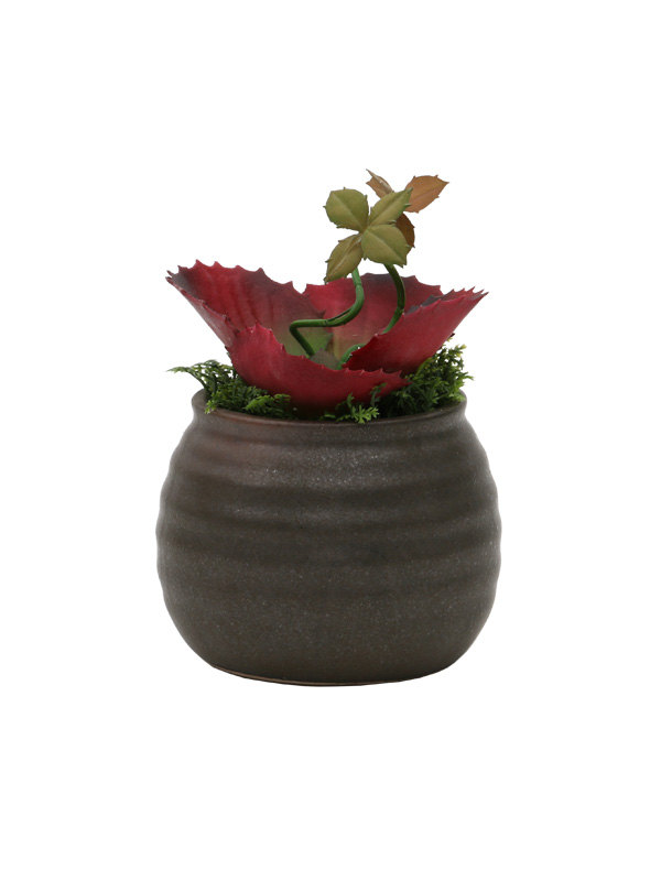 Product Img Exotic Red Potted Plant
