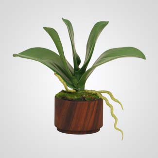 peace-lily-potted-plant