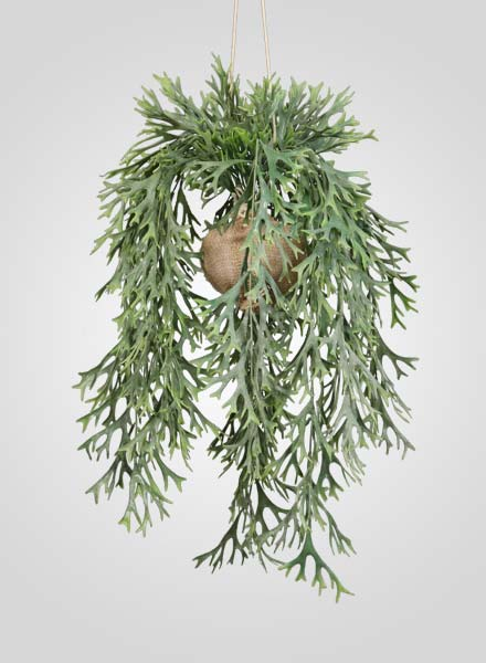 evergreen-fern-potted-plant